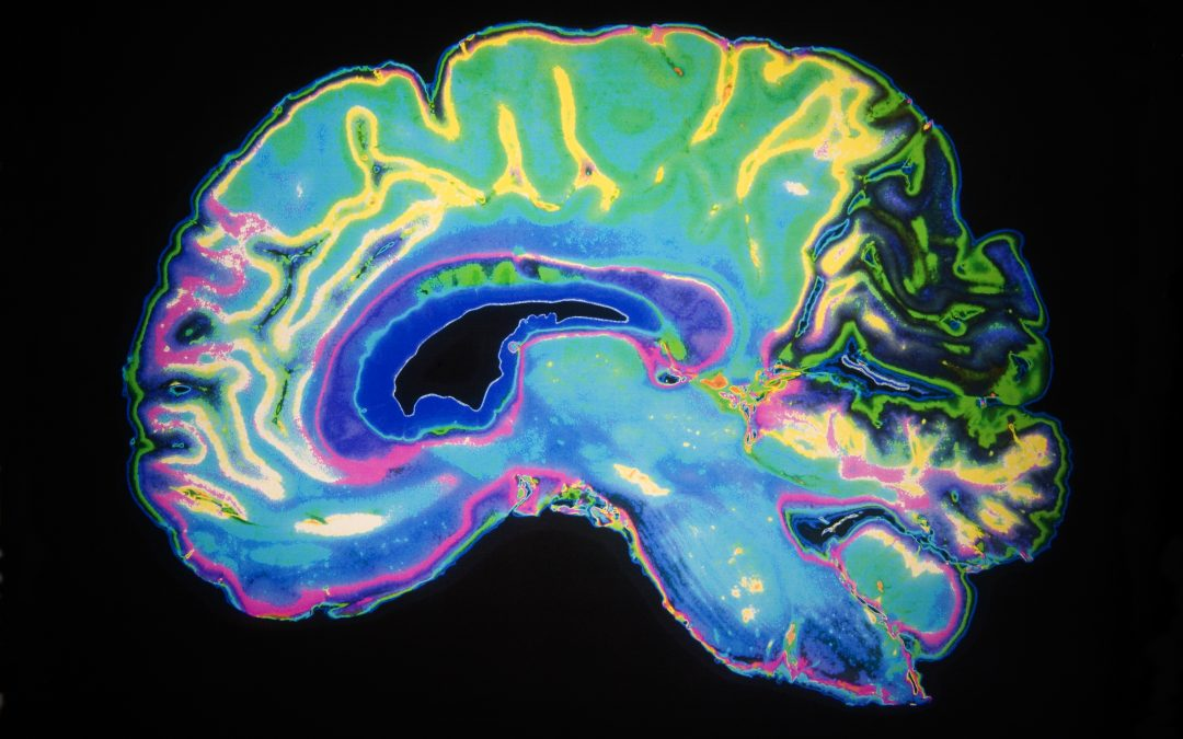The Psychology of Longevity